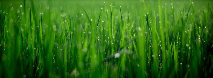 Jak założyć trawnik z rolki?<
